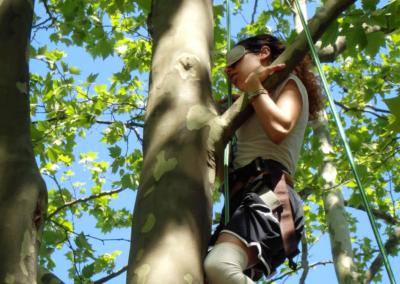 Perfectionnement à la grimpe dans les arbres