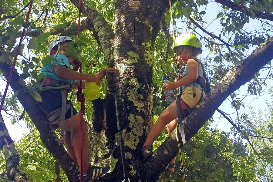 Initiation Grimpe dans les arbres (Lozère)